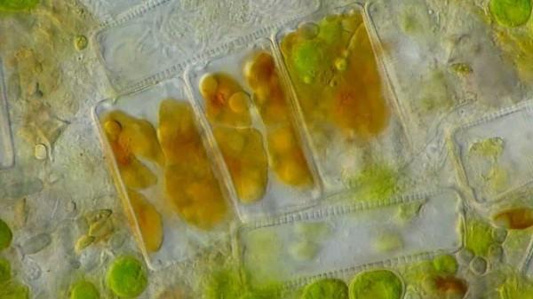 На Марсе могли остаться следы тысяч метрических тонн липидов