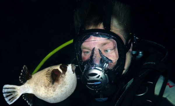 Подводная красота Красного моря: Удивительные фото украинского дайвера - ТЕХНО