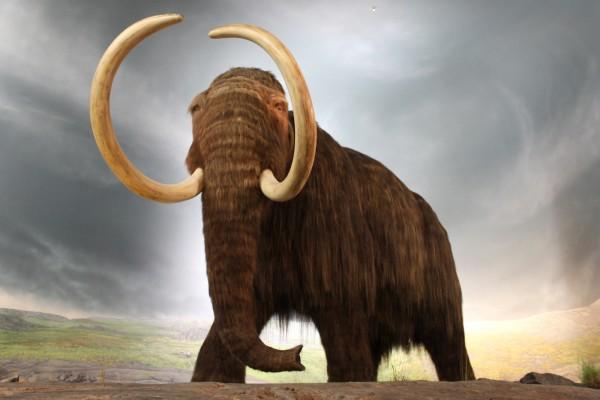 Мамонтов клонируют из слонов