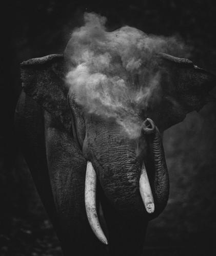 Прах к праху - Величественный слон, идущий навстречу фотографу, осыпает себя пылью, сброшенной из хобота