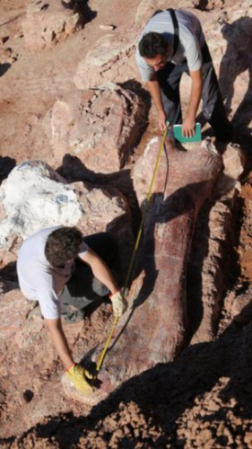Динозавр весил 77 тонн