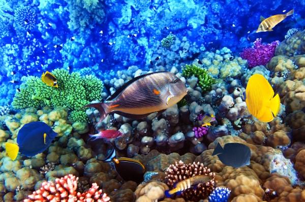 Правила поведения в море в Египте