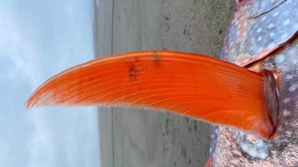 Рыба-луна выброшена на берег около пляжа Сансет-Бич в северном Орегоне 14 июля