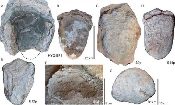 На этом участке найдены отпечатки старых стегозавров