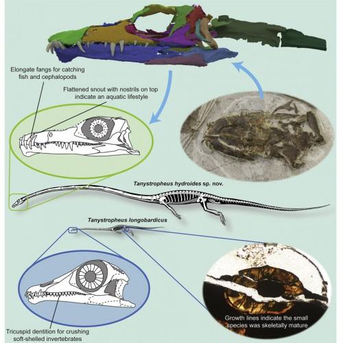 Воссоздание облика рептилии