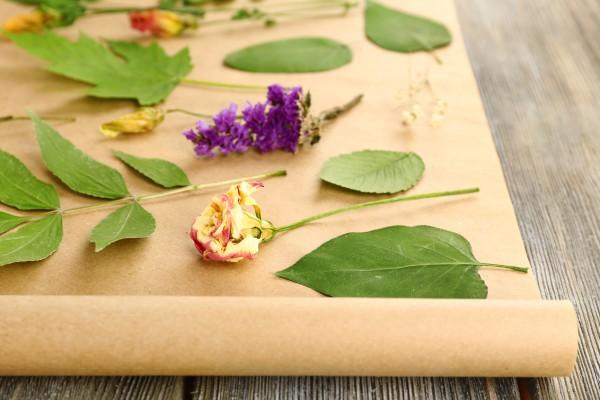 Как засушить растения для гербария
