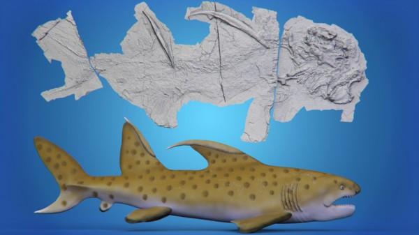 Окаменевший скелет акулы Годзиллы рядом с изображением художника, как он мог выглядеть
