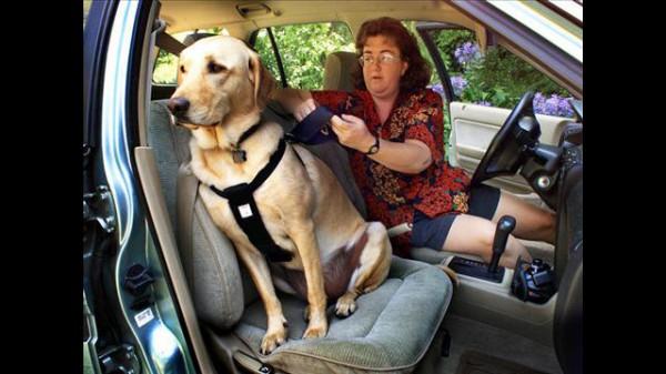 Вывод: спасти собаку при фронтальном столкновении очень трудно