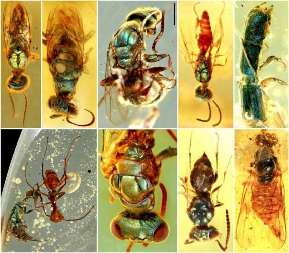 Ученые могут предположить, какое эволюционное давление привело к тому, что все эти разные насекомые начали переливаться, но точно знать это невозможно