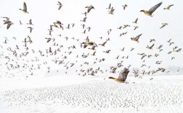 Лучшие работы конкурса Drone Photo Awards 2021