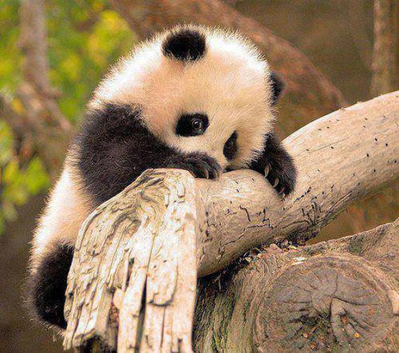 Сергей убрал все фото  и поставил панду