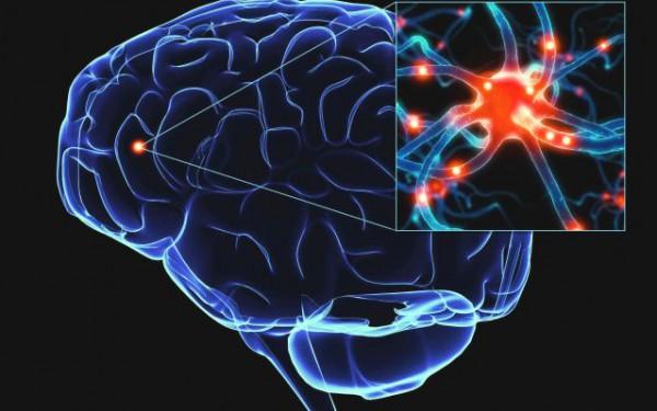 Любовь влияет на мозг
