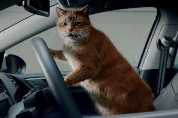 Это - котик за рулем Гольфа.