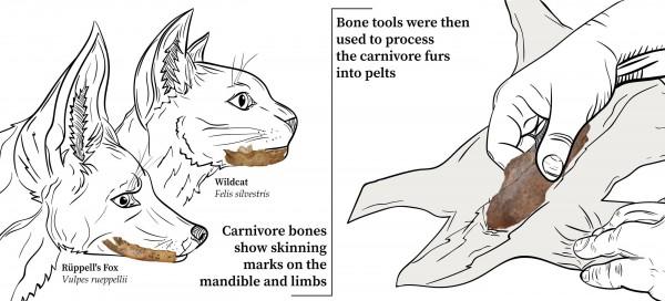 С хищников снимали шкуру и использовали костяные орудия для изготовления мехов.