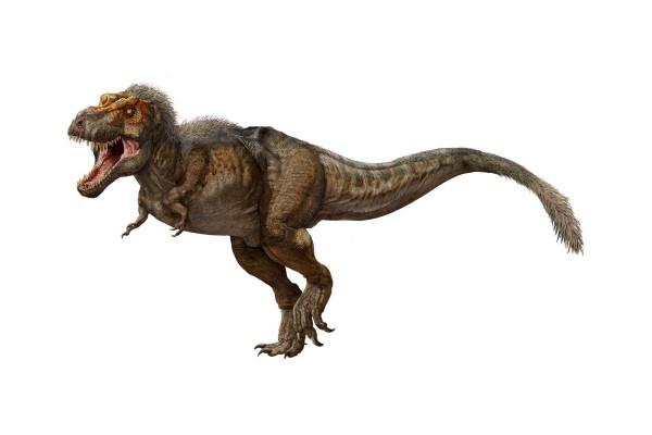 Предполагаемый внешний вид тираннозавра