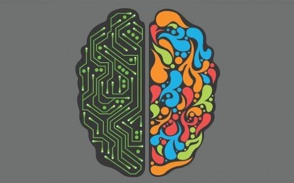 Мозг не делится на творческое и математическое полушария