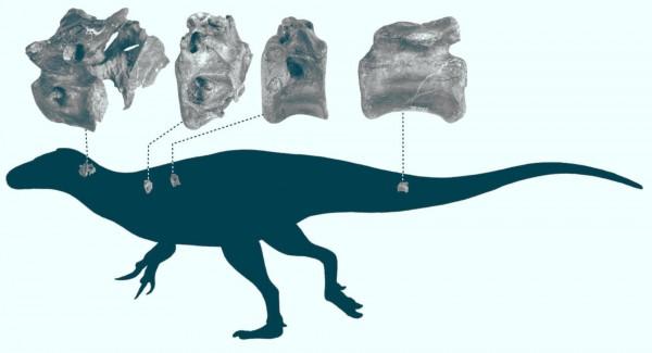 Силуэт Vectaerovenator inopinatus с указанием происхождения костей