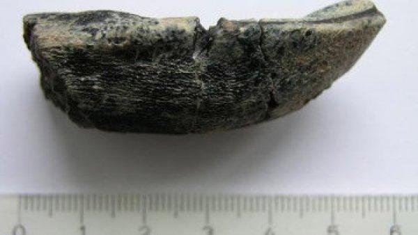 Температуру динозавра определили по зубам