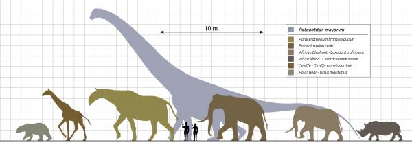 примерный размер P. transouralicum (третий слева) по сравнению с размером человека, других крупных млекопитающих и динозавра Patagotitan mayorum