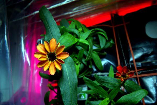 Распустившийся цветок на МКС