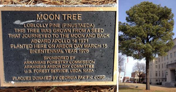Лунные деревья высадили на Земле