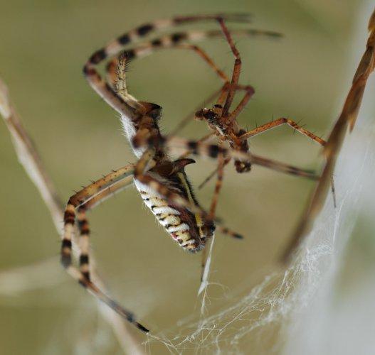 Секс с пауками