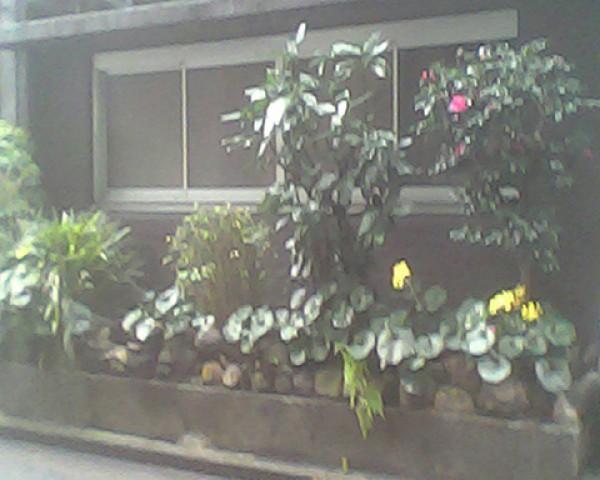 Пример фото