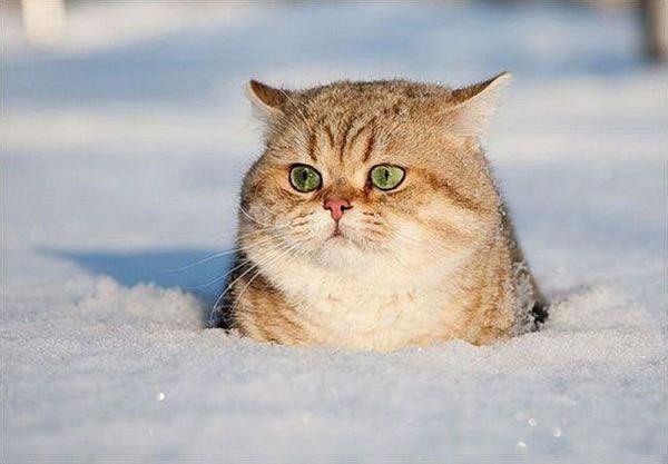 Кошки тоже справляются с ролью метеорологов