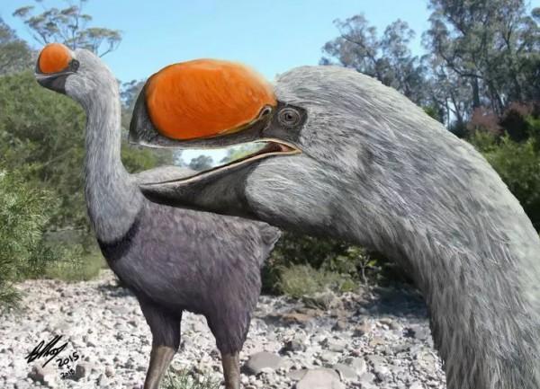 Впечатление художника о разновидности дроморнитидов, семейства вымерших гигантских нелетающих птиц, которые бродили по Австралии миллионы лет.