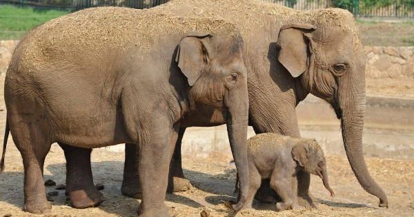 Слоны нуждаются в защите