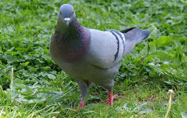 В случае, если птица поднимает крылья, это будет означать, что весом птицы при учете общего веса грузовика можно пренебречь