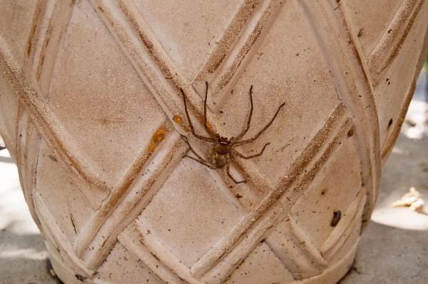 Опасны ли пауки для людей?