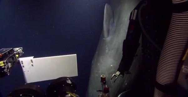 Кашалот подплыл вплотную к подводному аппарату