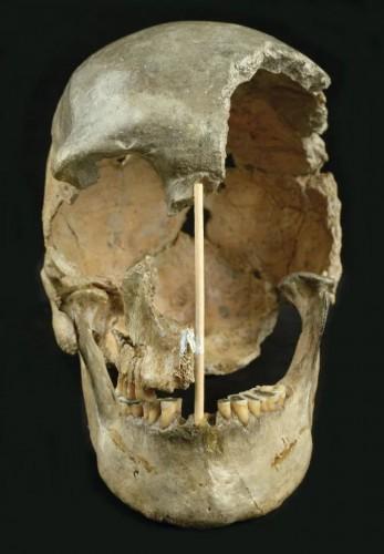 Череп, который, по мнению исследователей, представляет собой самый старый из известных геномов современного человека