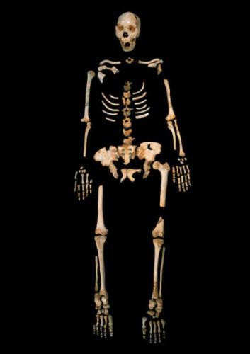 Скелет древнего предка человека