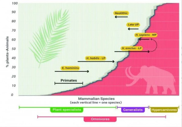 График перехода с мясной на растительную пищу