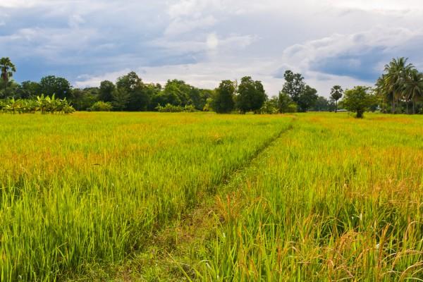 Земельное право в Украине