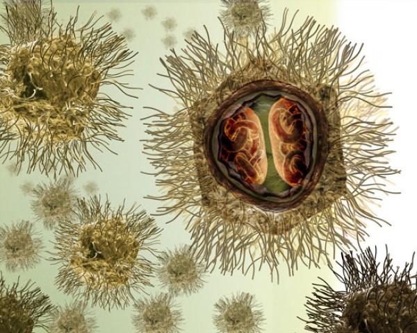 Гигантские вирусы признали новой формой жизни