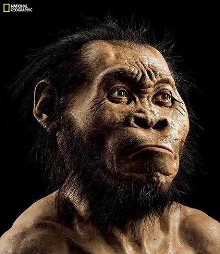 Предположительный вид Homo naledi
