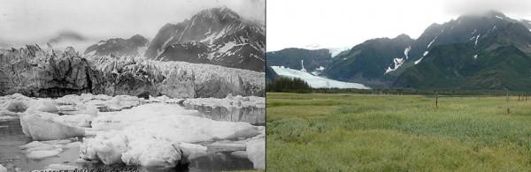 Ледник Педерсена (Аляска) в 1917 и 2005 году
