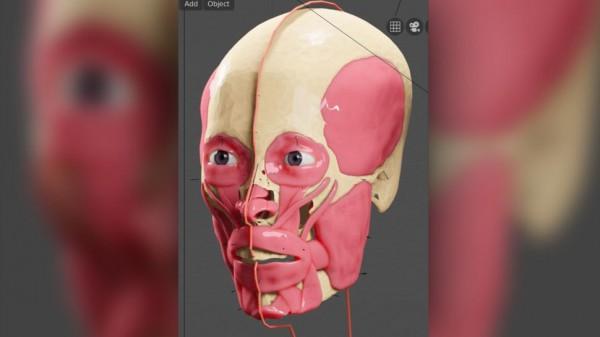 Лицевые мышцы и связки были смоделированы цифровым способом на черепе KV 55