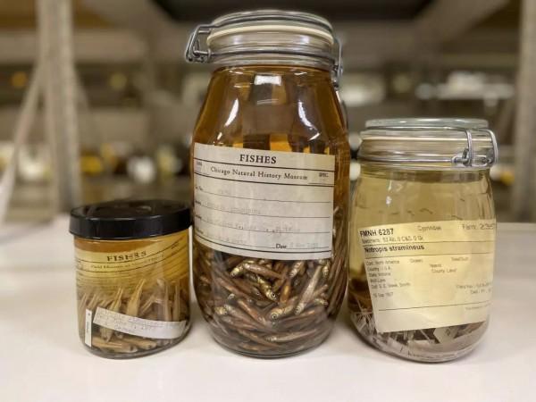 Песчаные рыбки были среди образцов, изученных в рамках нового исследования микропластика