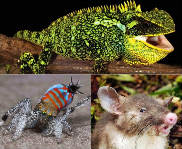 ТОП-15 необычных животных