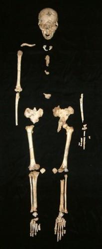 Скелет хоббита
