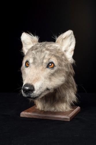 Реконструкция головы собаки
