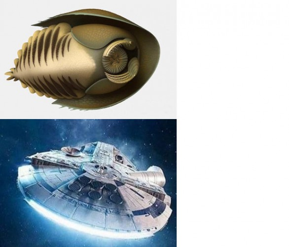 Вверху: кембрийский хищник Cambroraster falcatus. Внизу: космический корабль «Тысячелетний сокол» (Millennium Falcon), в честь которого был назван новый вид.