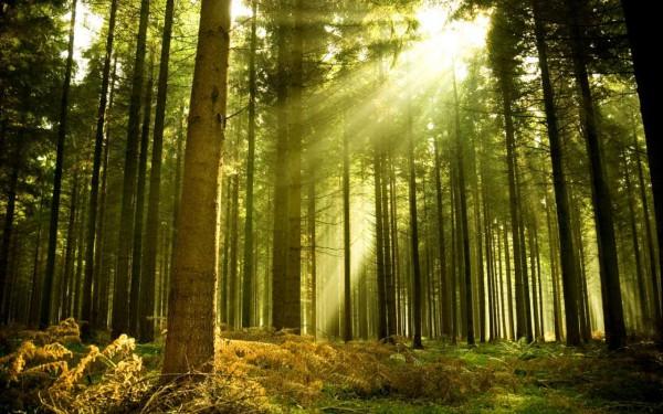 День лесов