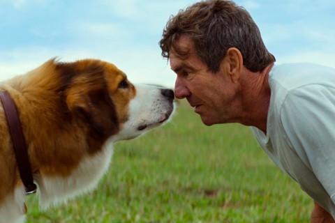 44 hd фильм Собачья жизнь