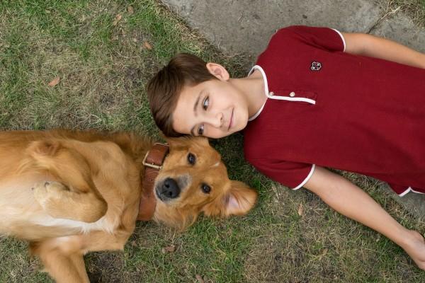 На этой неделе выходит трогательный фильм Жизнь и цель собаки.