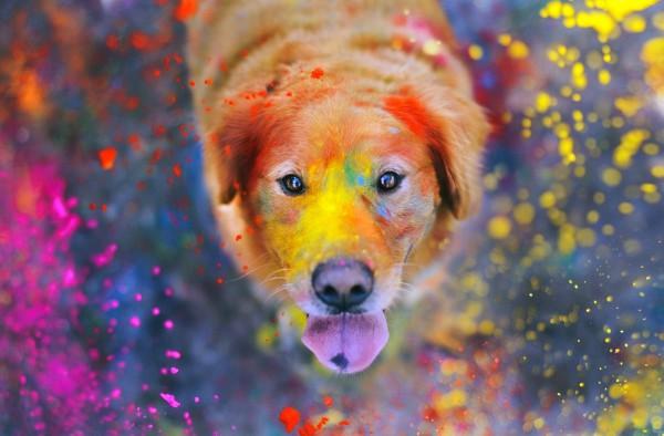В Киеве пройдет Фестиваль красок Холи.